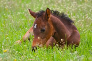 Embryo Transfer for Competition Mares & Polo Ponies